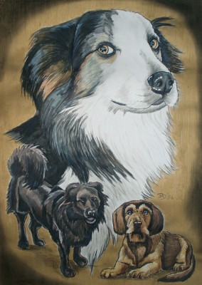Border-Collie, Rauhaardackel  and crossbreed